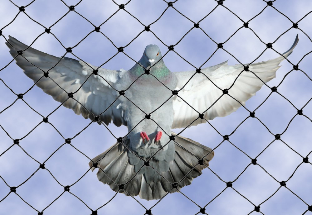 heavy-duty-bird-netting2